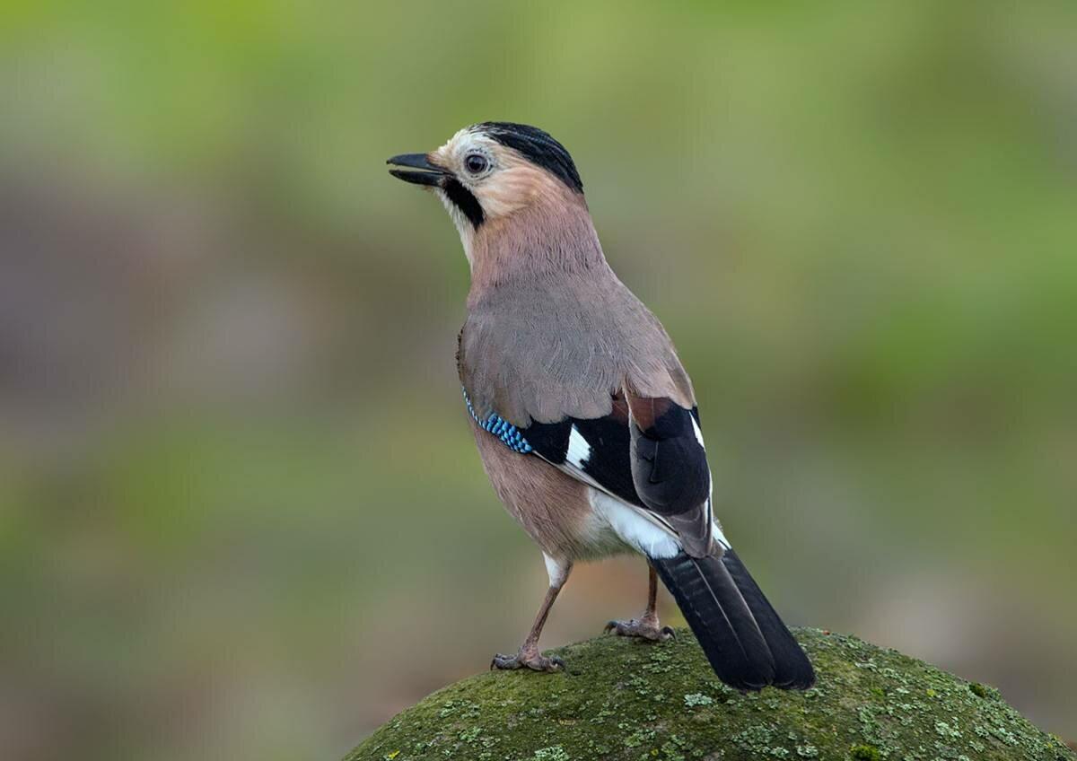 вот-вот фото птиц с названиями в тольятти могли оставить без