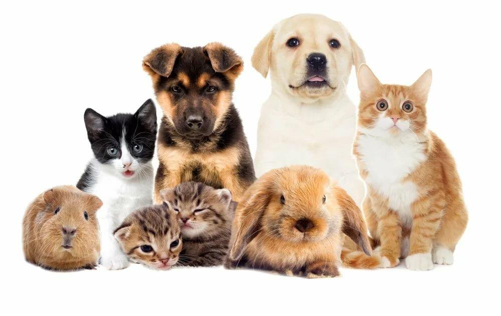 Кошки и собаки разных пород картинки