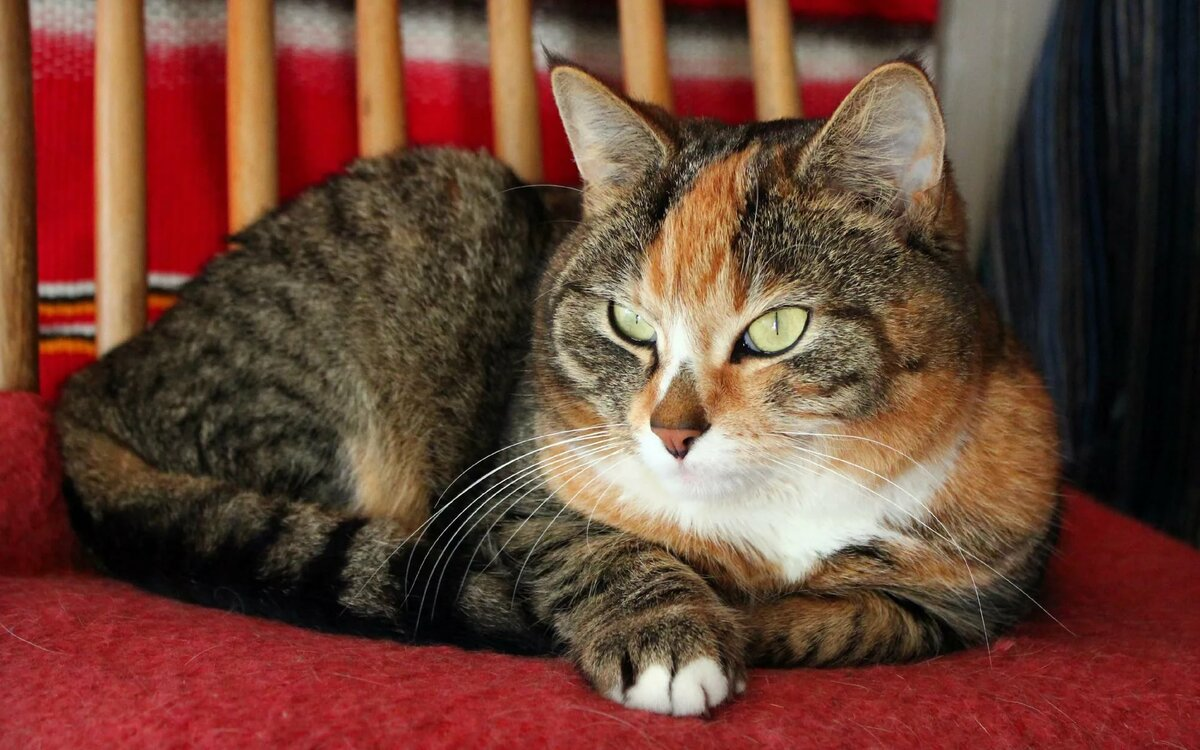 Днем, картинки кошки