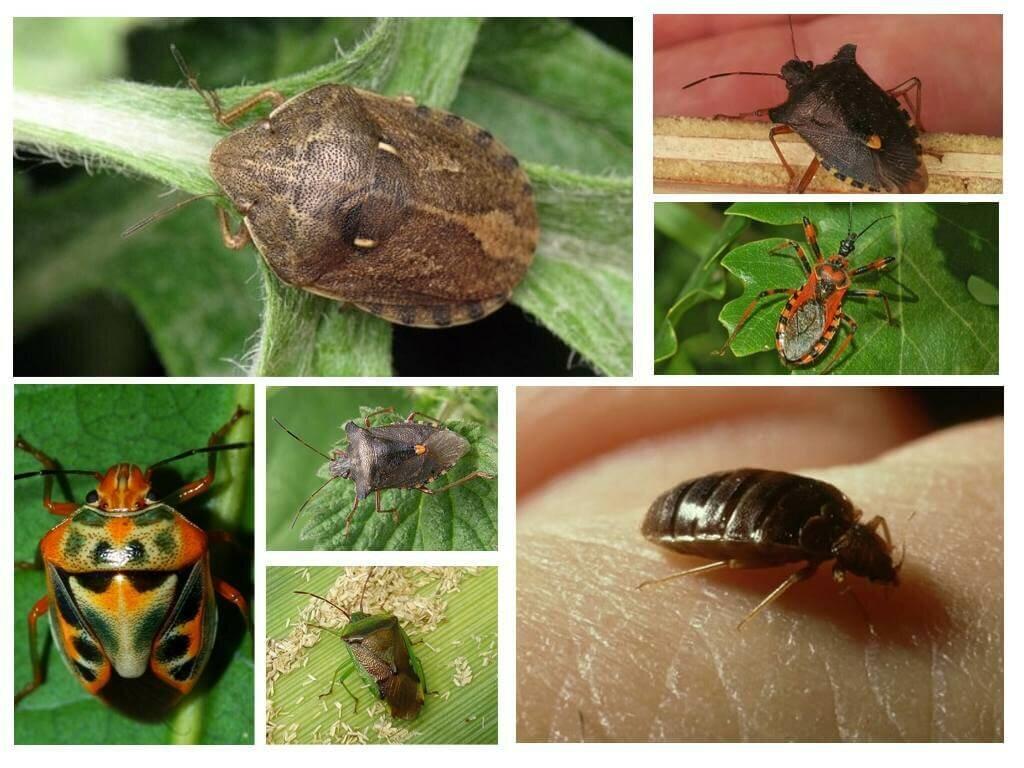 насекомые в квартире в картинках с названием