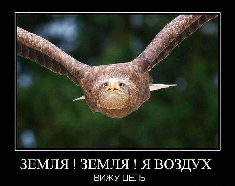 демотиваторы птица счастья система