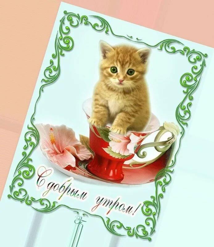 Для, открытка с добрым утром коты