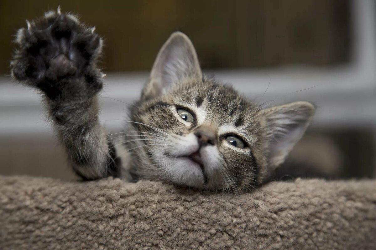 Фотки смешных кошек и котят