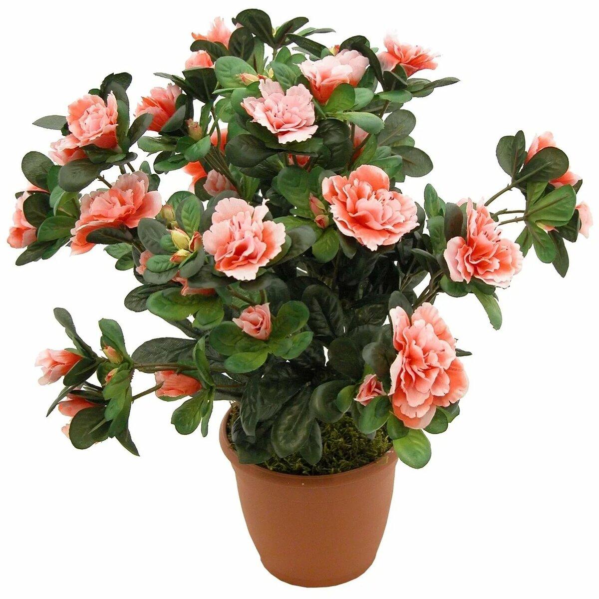Цветы лизиантусы, купить цветы азалия в украине