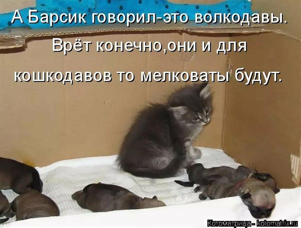Очень смешные фотографии до слез с котами и надписями, ювелиру картинки