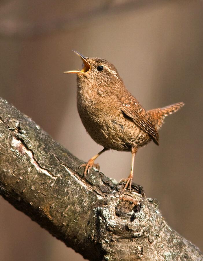 Самые маленькие птицы подмосковья фото с названиями