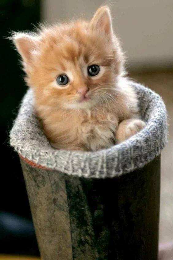 Картинки мраморная кошка фото