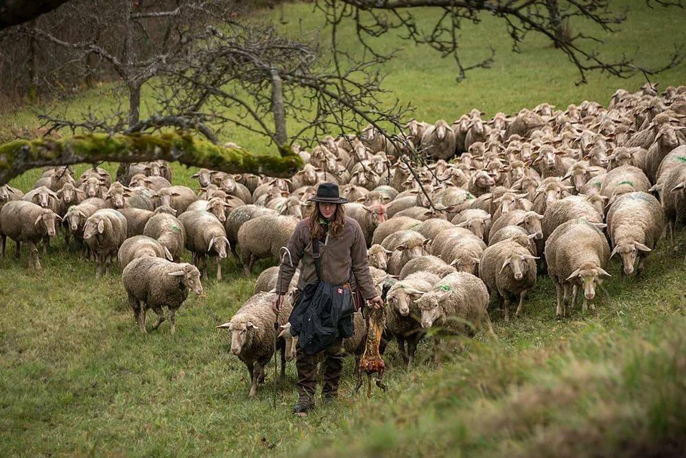 интернет картинка пастуха с бараном сказать, именно