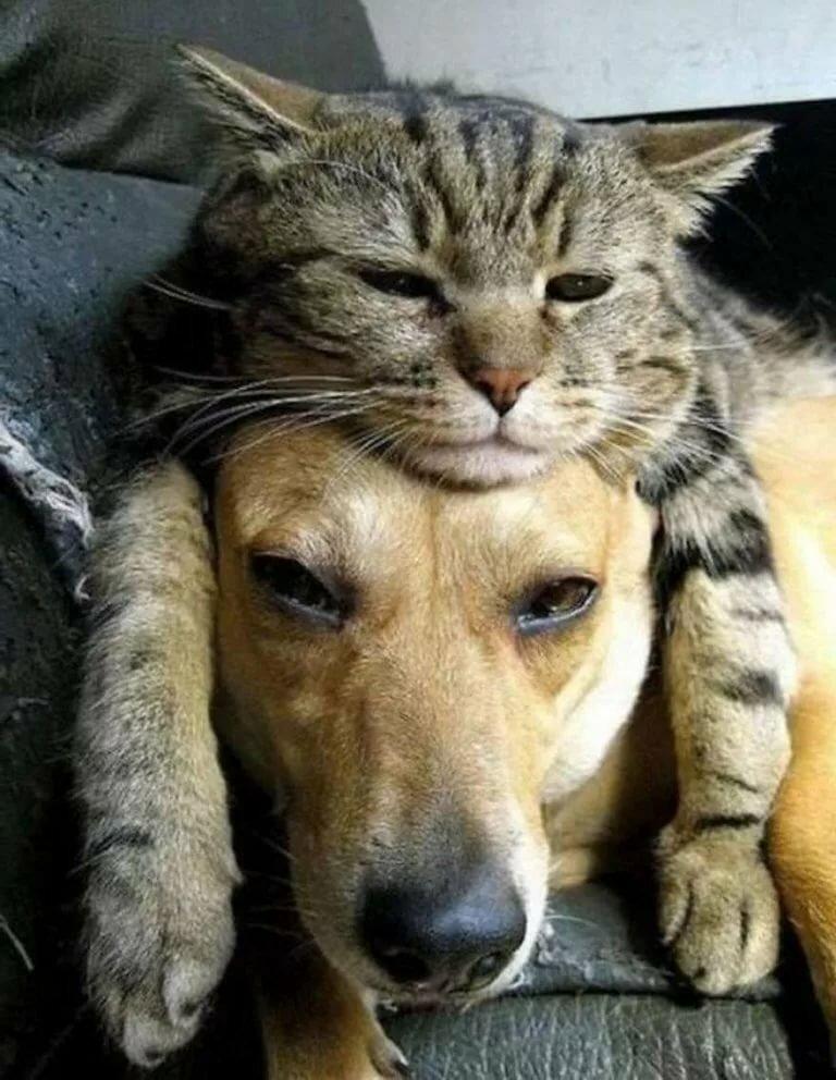 Прикольные фото и картинки кошек и собак, подводной