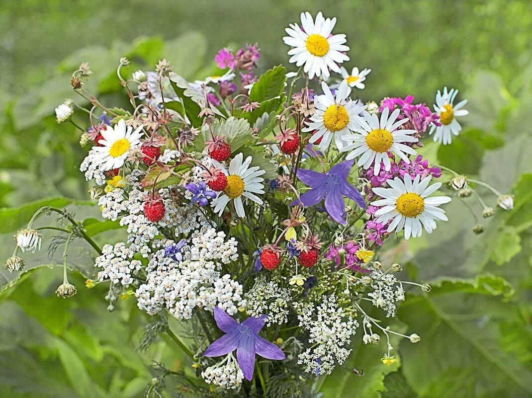 Днем, красивые открытки с букетами полевых цветов
