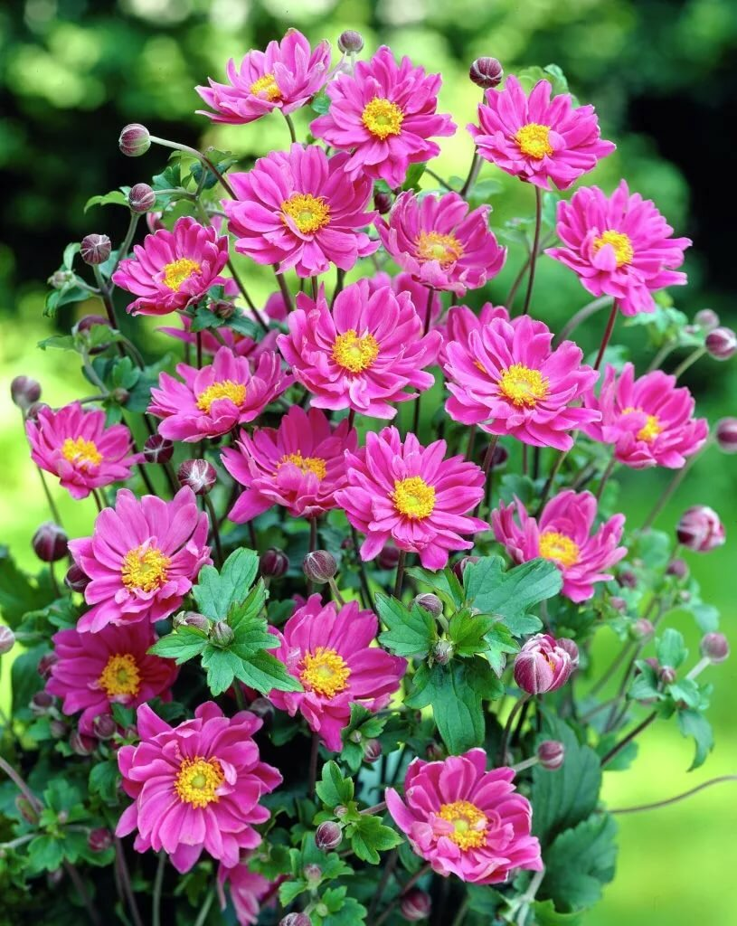 Красивые уличные цветы фото и названия