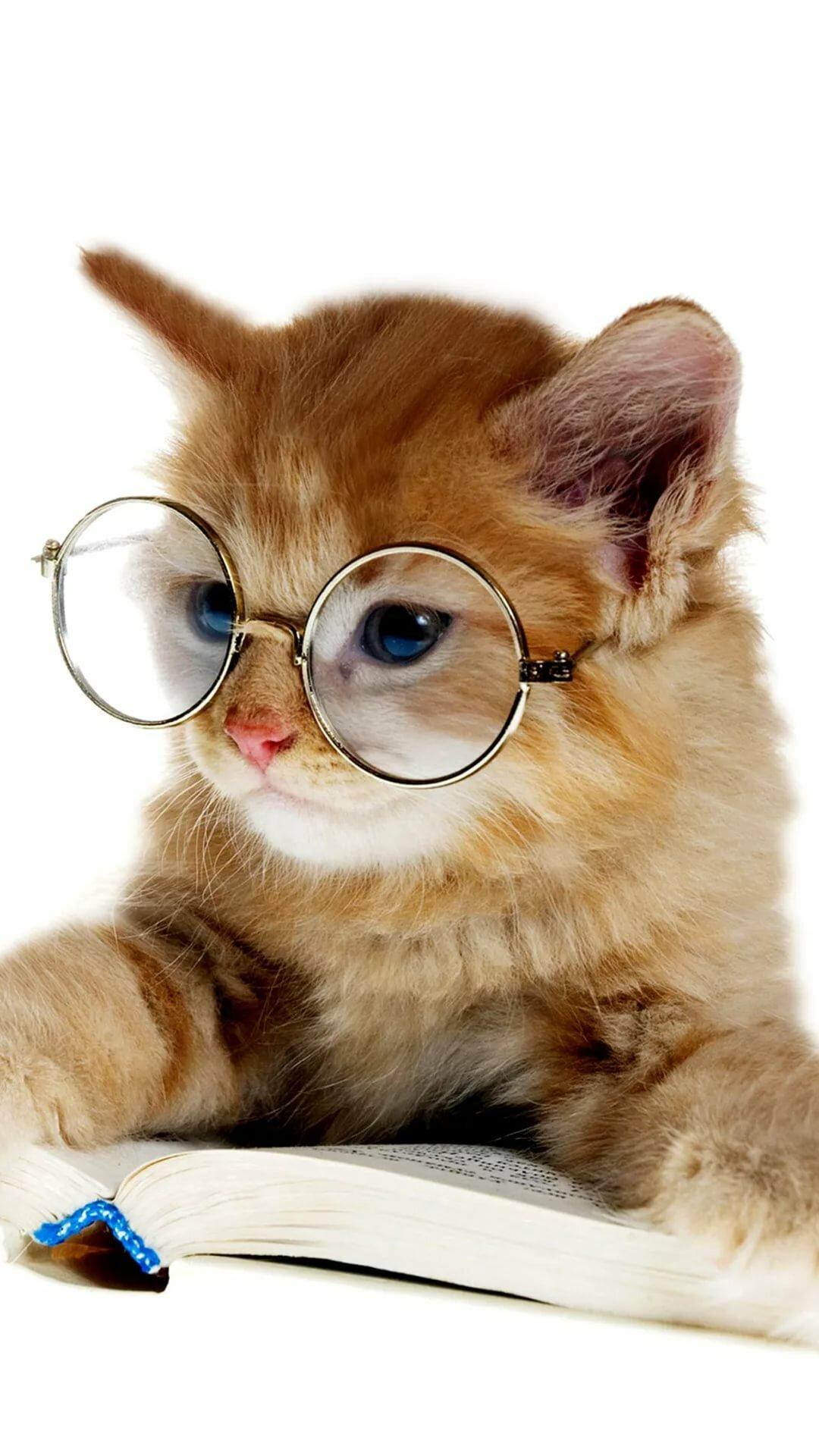 подтверждением этому картинки с котята в очках возрасте