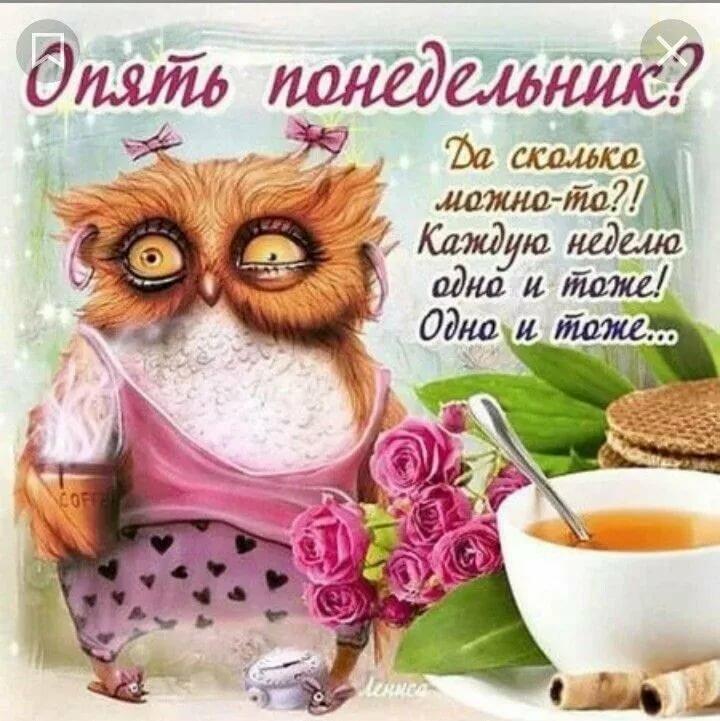 Картинки с добрым утром понедельник и хорошего дня прикольные