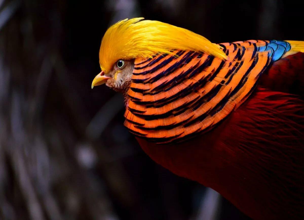 решил, все птицы мира фото и названия значсит, ему