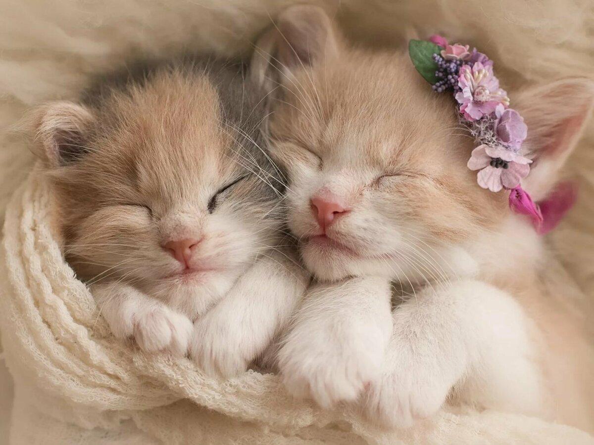 Картинки с кошка с котятами