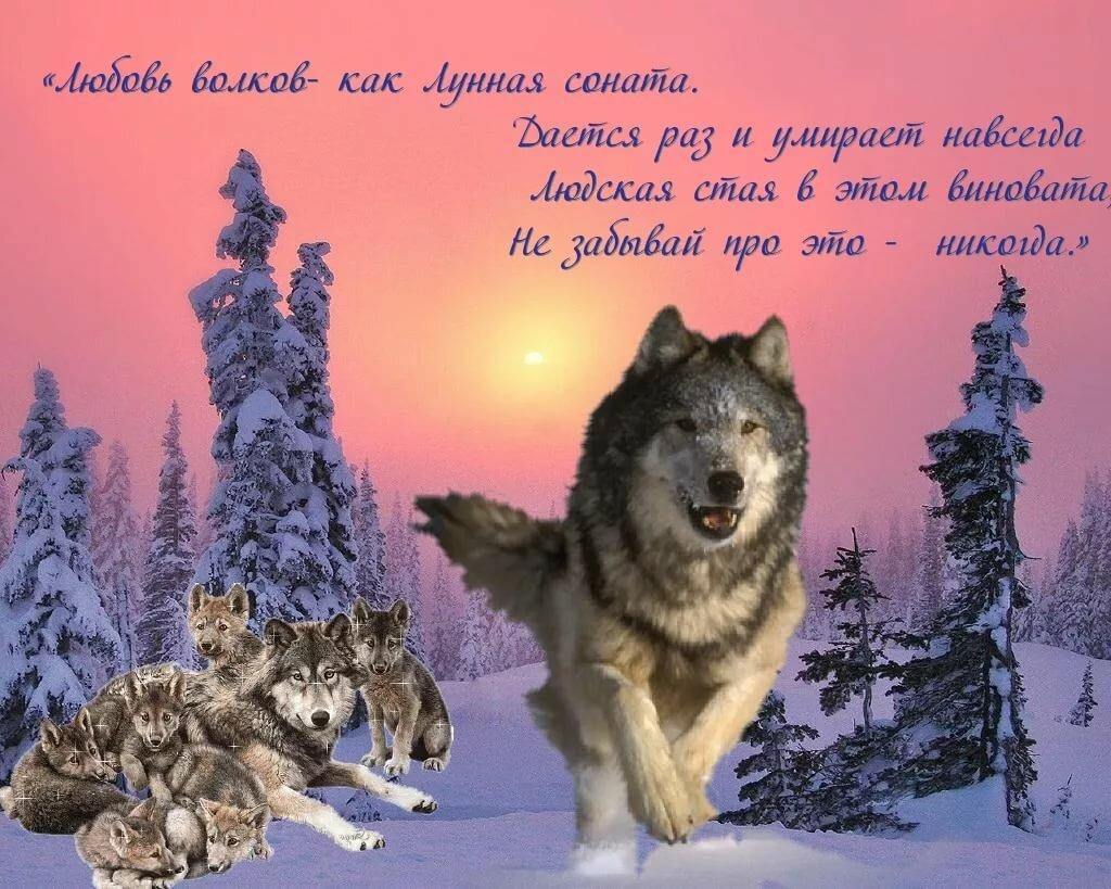 Красивые открытки одинокий волк
