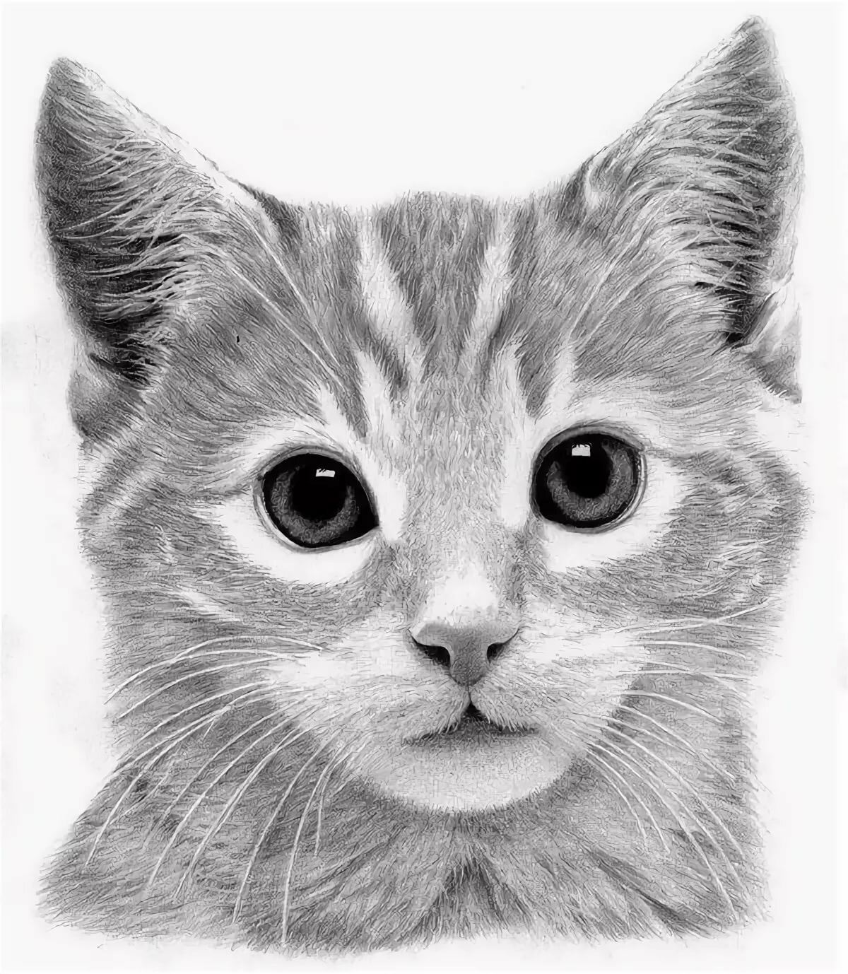 Кошки нарисованные картинки смотреть