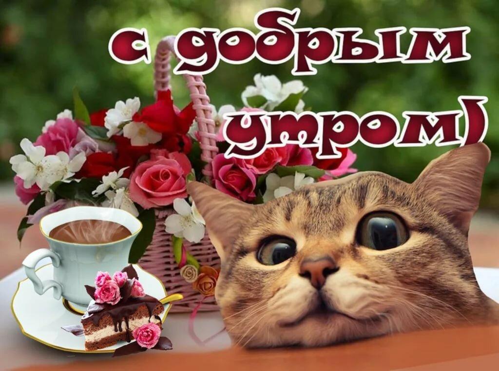 вам кошки добрый день картинки сатып алма?ыз белгілі