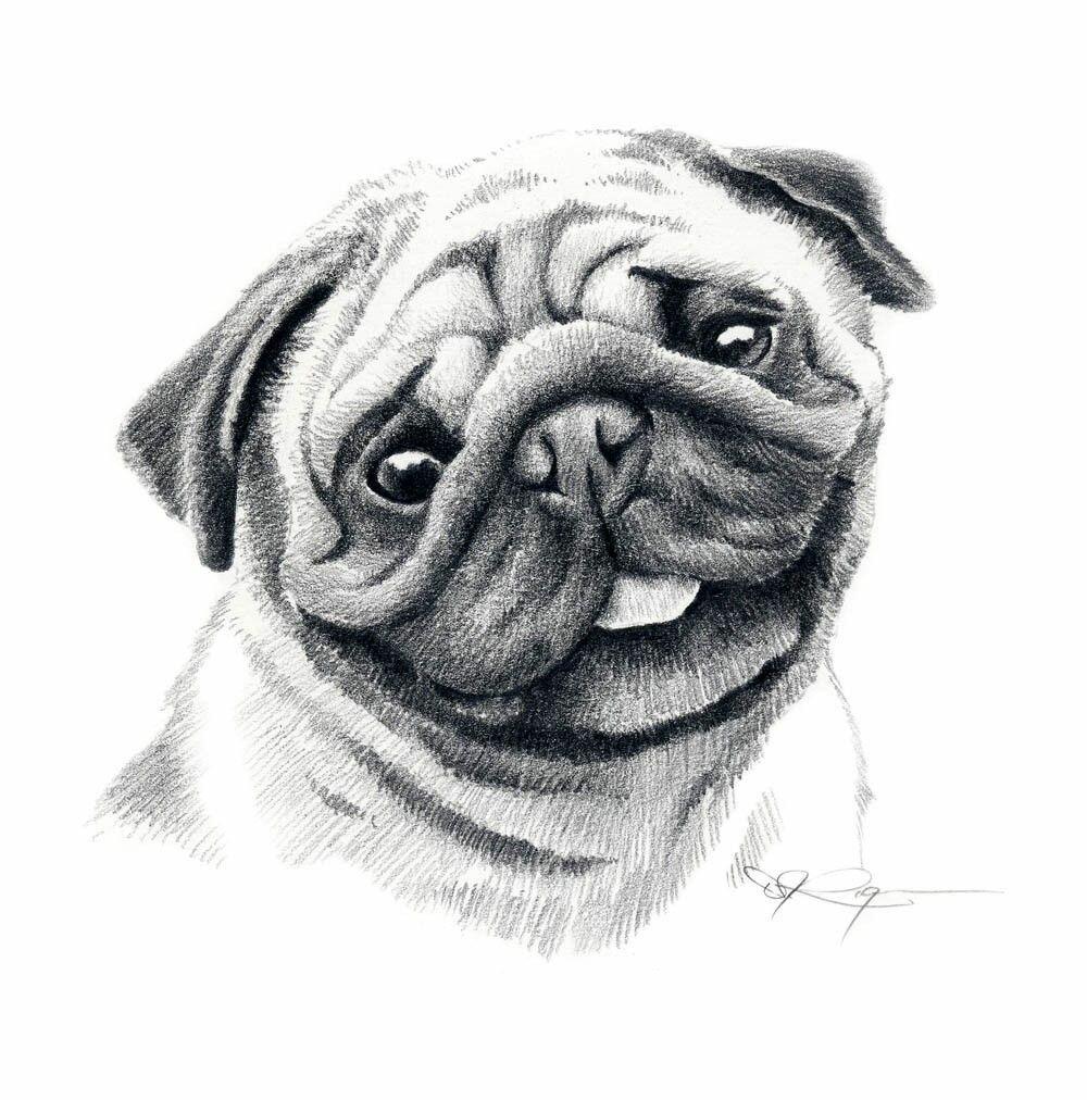 настройки картинки как нарисовать собаку мопса убегающую