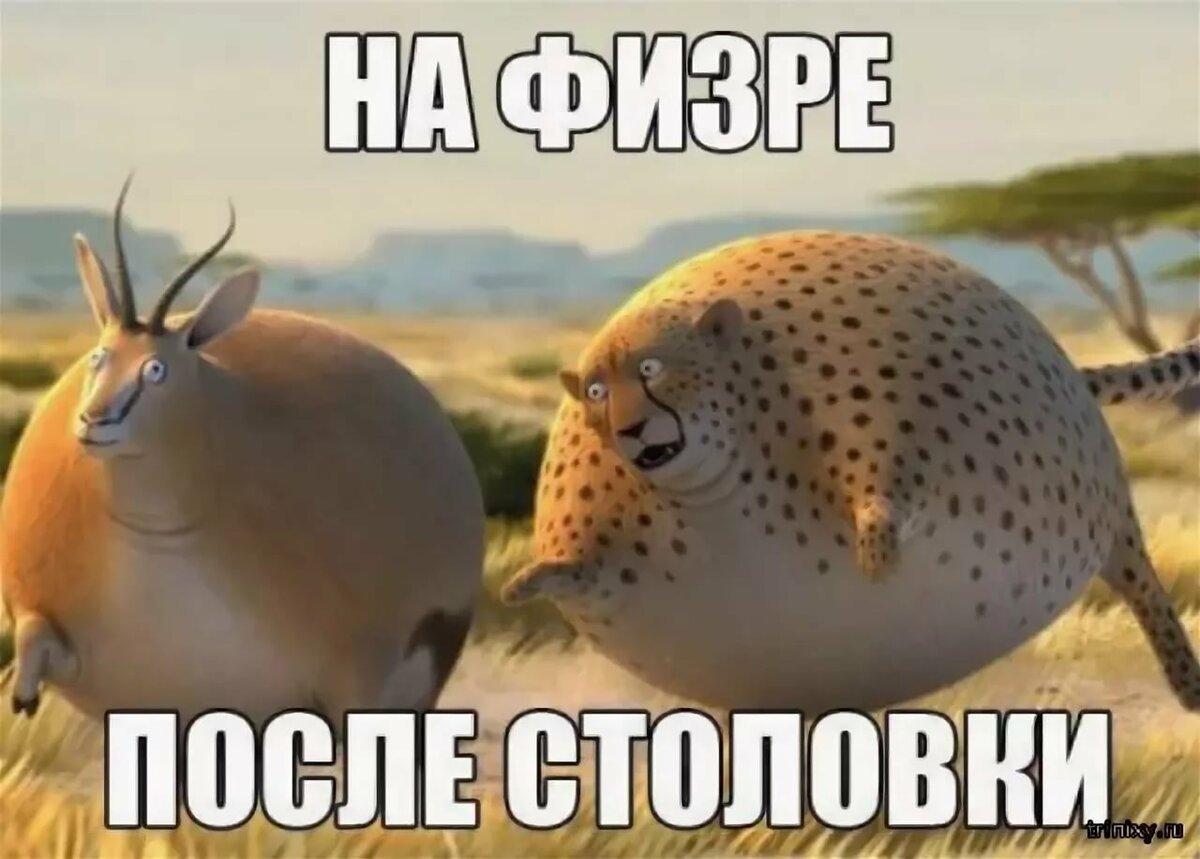 Яндекс картинки смешные с надписью, извини погорячилась картинки