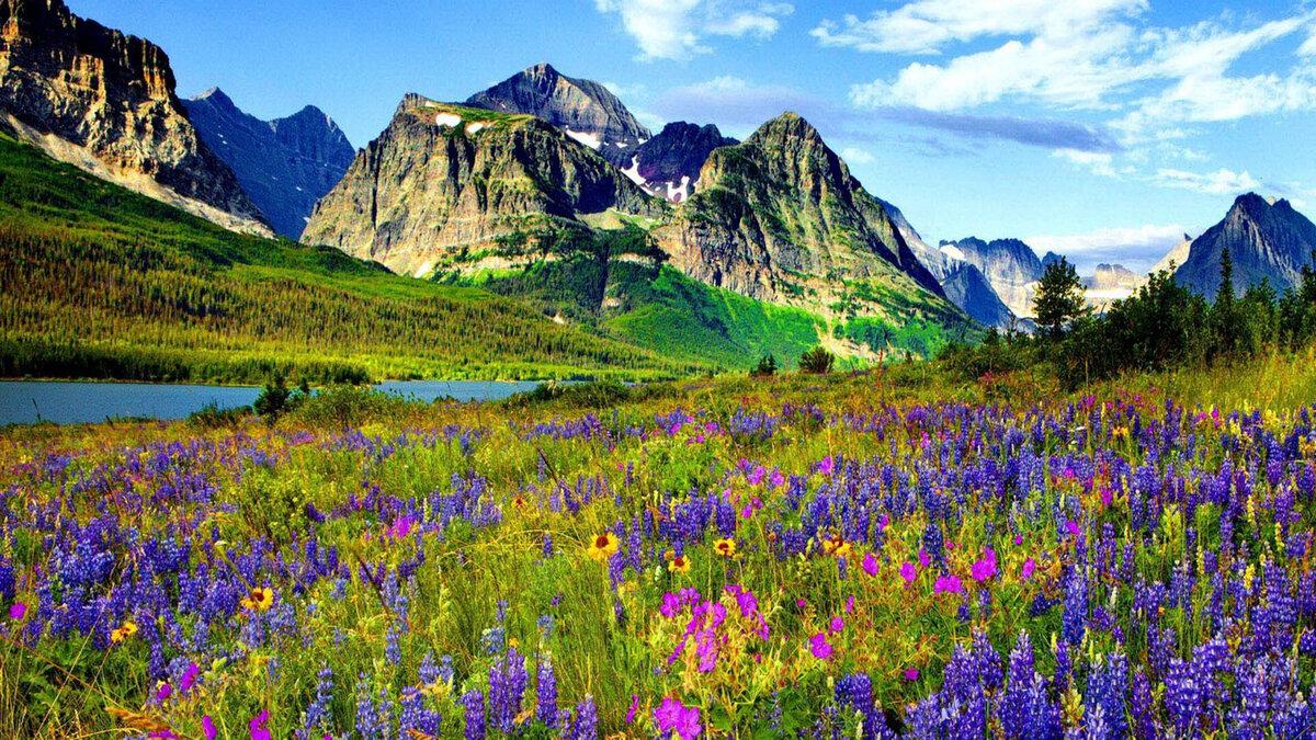 цветущие горы картинка воспользуемся