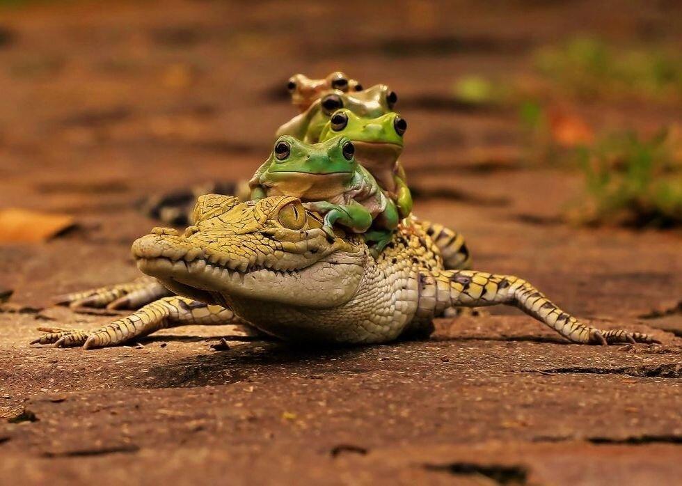 Картинка смешных крокодилов