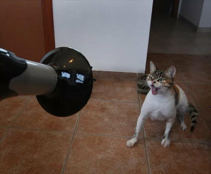 Днем, картинки с кошками со смешными надписями