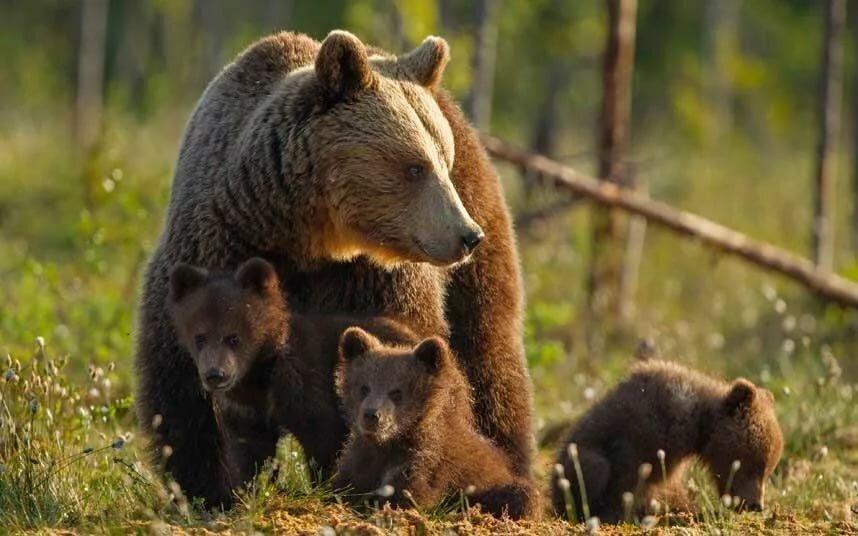 Детеныши диких зверей картинки