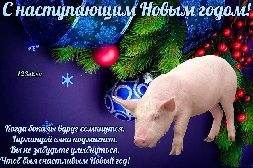 Открытка год свиньи с юмором, шея хомут
