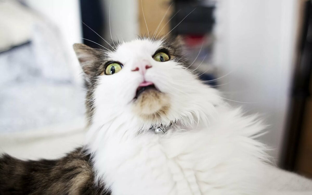 Фото кота смешного, открытка