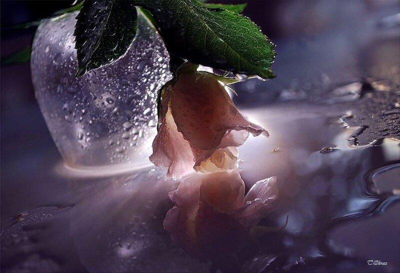Картинки спокойной ночи с розами в снегу