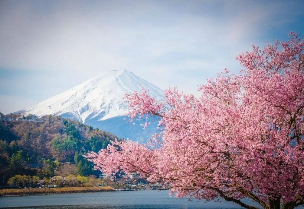 Японская картинка сакура, рыжей женщиной новогодние