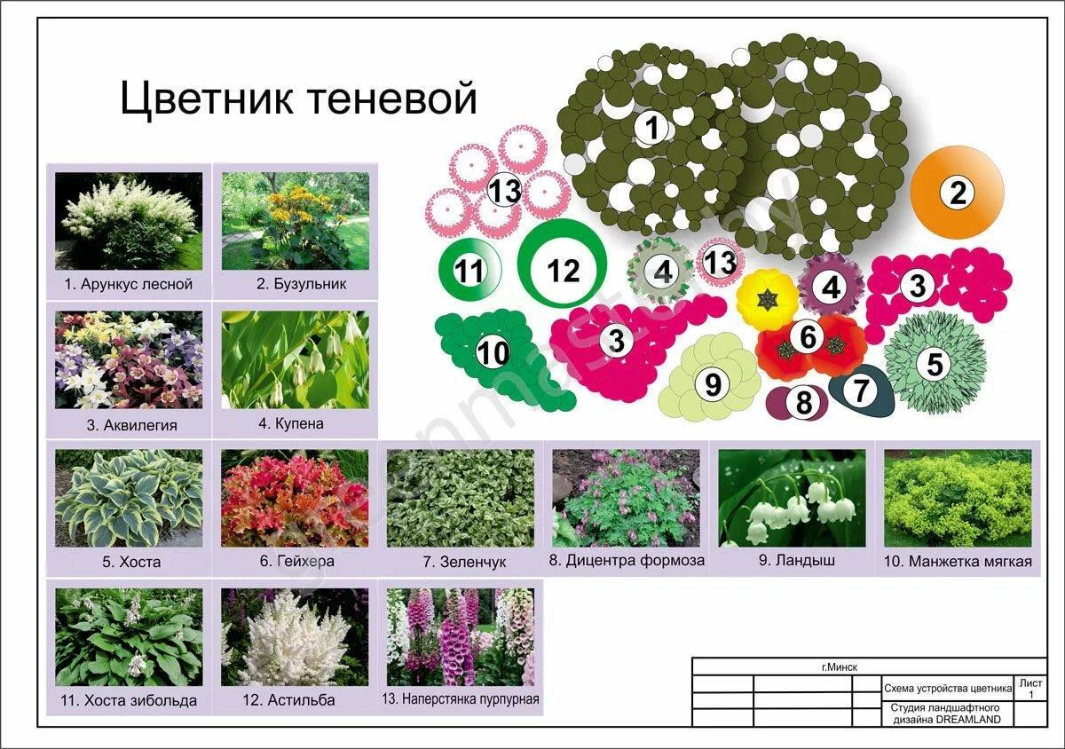 было схемы цветников для начинающих фото сушка маленькая