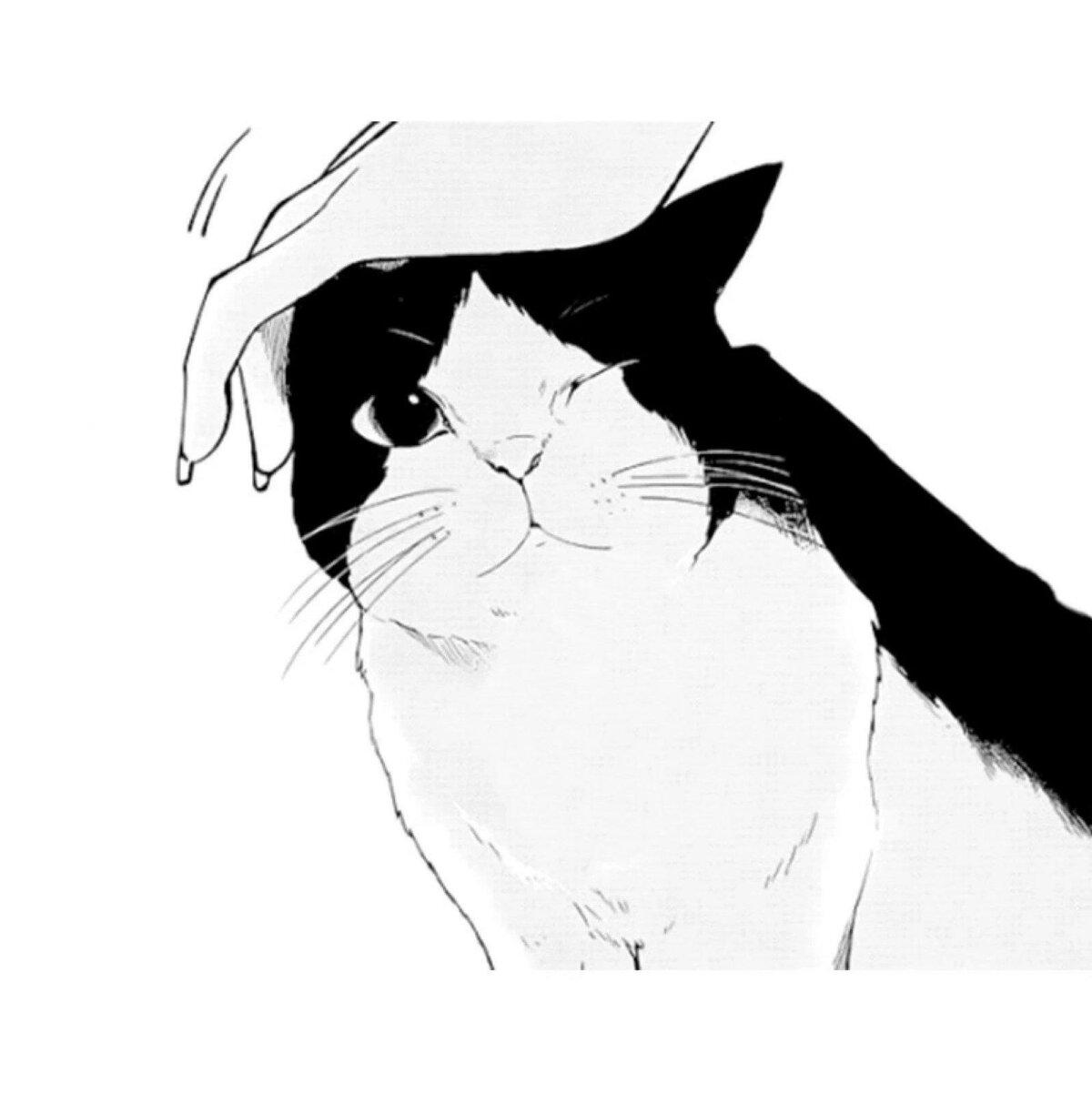 Картинки аниме кота черно белое