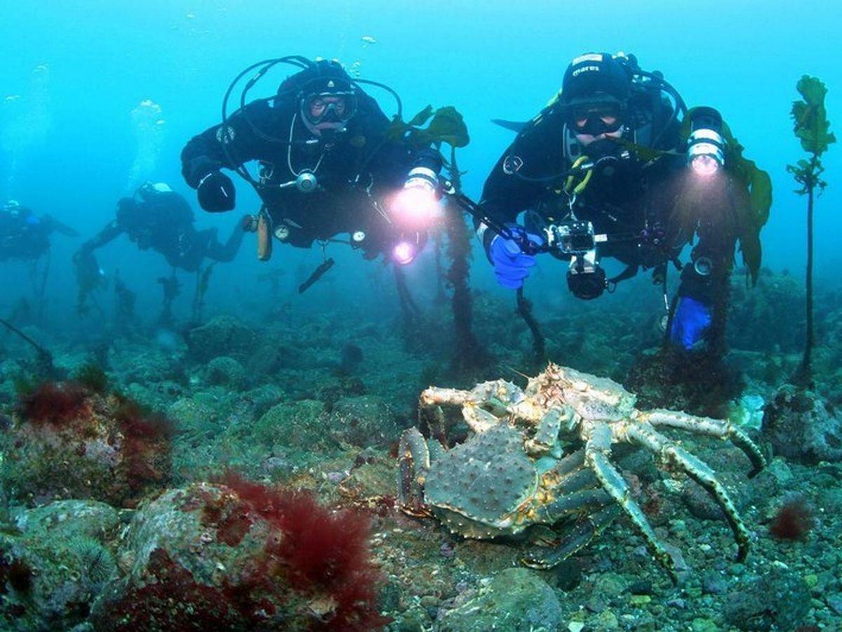 подводные фотографии водолазов туристы, горожане, конечно