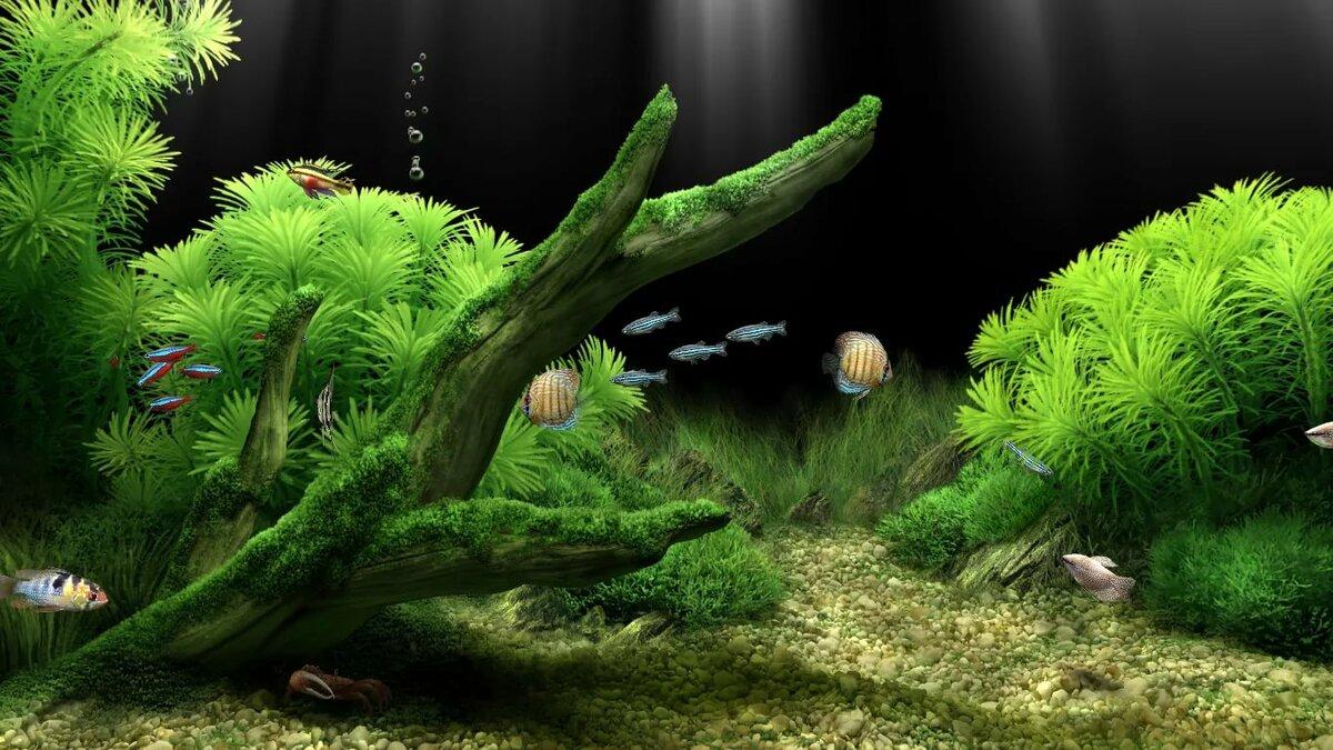 Картинки анимации аквариум на рабочий стол