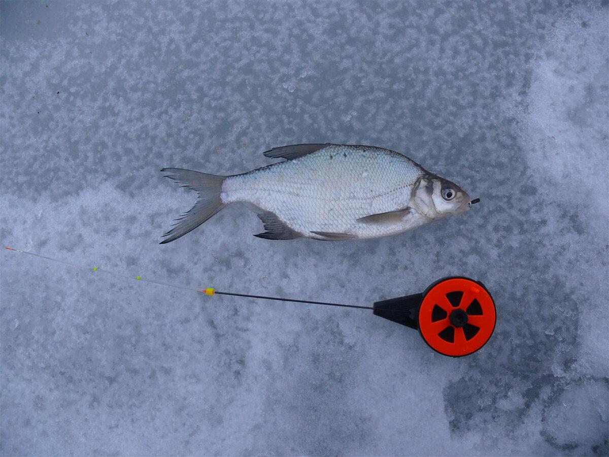 Ловля леща зимой на чертика