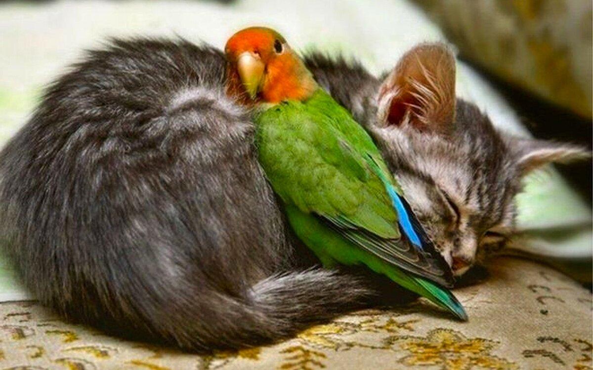Смешные животные и птицы