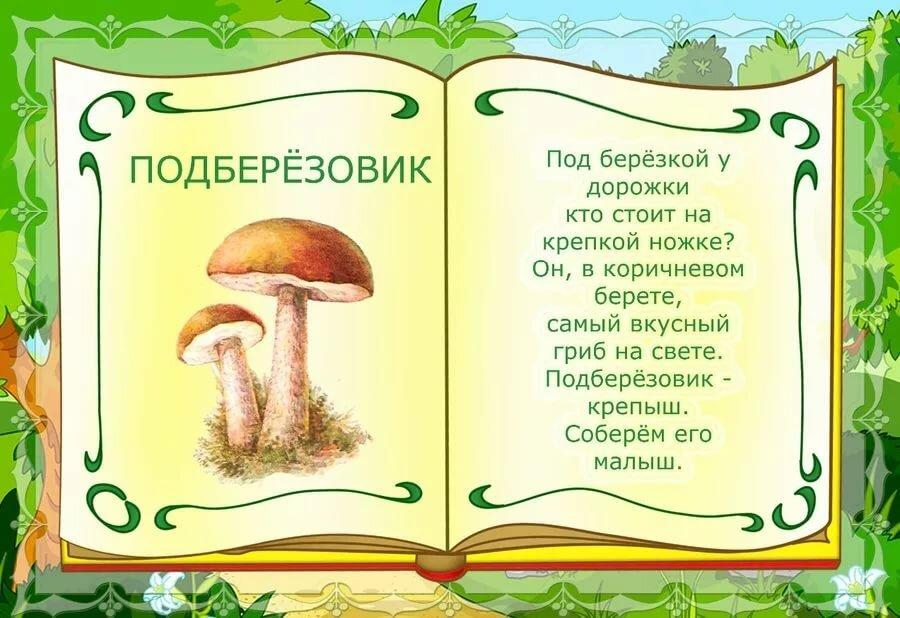 о грибах картинки про грибы качество