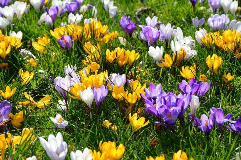 ранние весенние садовые цветы фото начал
