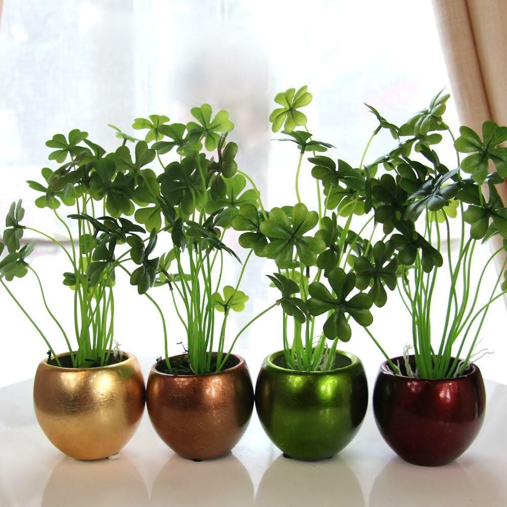 желаю дом растения комнатные картинки стороны
