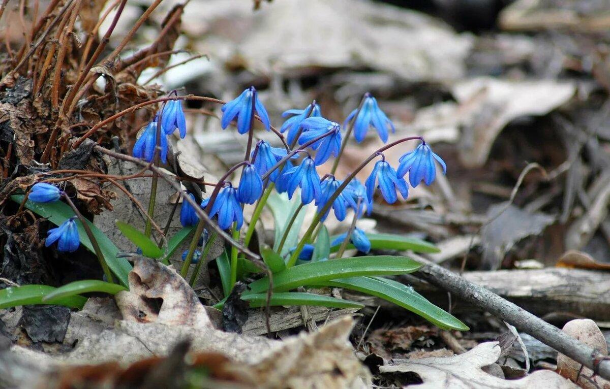 Весна пролески картинки на рабочий стол, жаль картинки прикольные