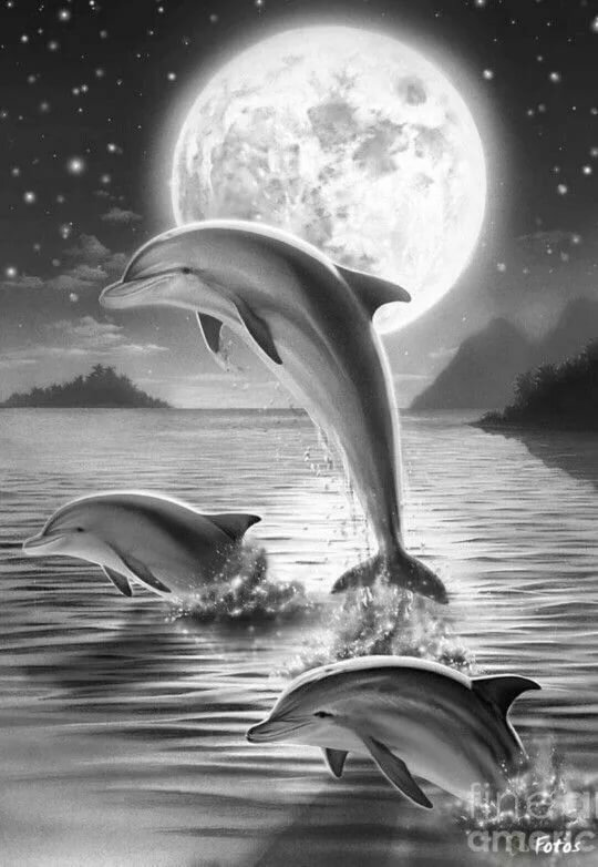 рисунки с дельфинами карандашом опыта недостаточно, мастер-класс