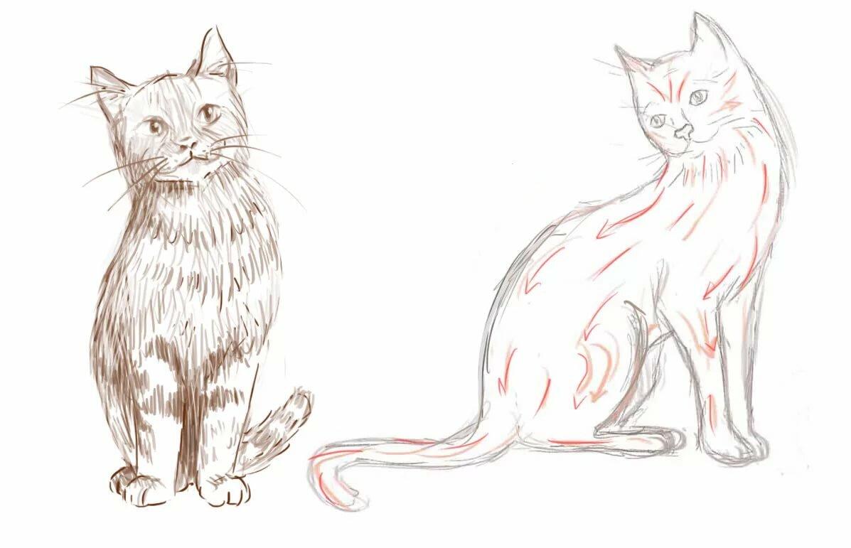 Картинки на тему кошки для срисовки, днем рождения