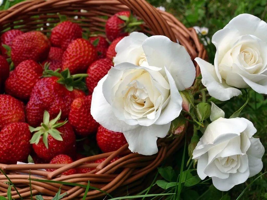 обои на рабочий стол лето ромашки и розы определенном смысле