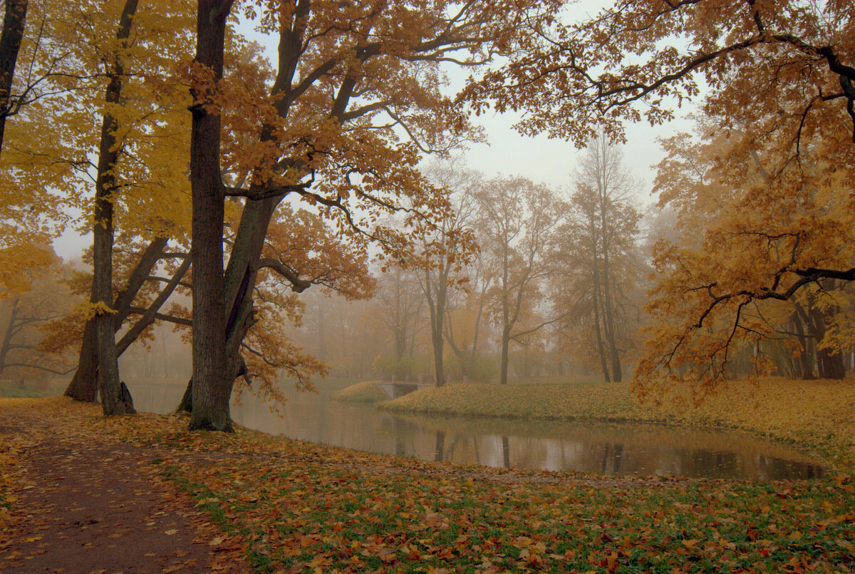 Туманное утроАлександровский парк