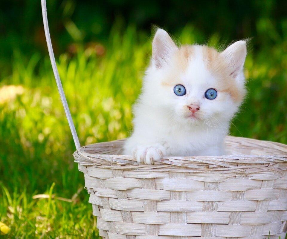 главных тем картинки котята обои для рабочего стола информации линейке