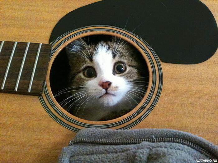 Смешные картинки с гитарами