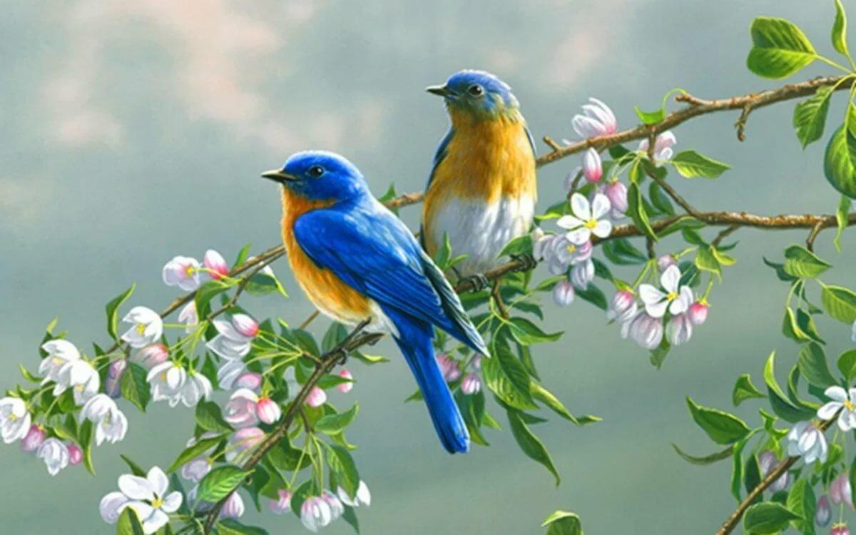 Открытки птичек, надписью много будешь