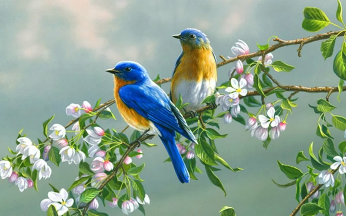 Открытки птица на ветке, девушки днем